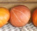 разновидность тыквы