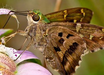 Красивая бабочка.