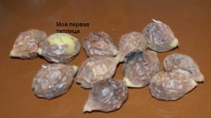 Вот они первые орешки с перезревшим коричневым околоплодником.