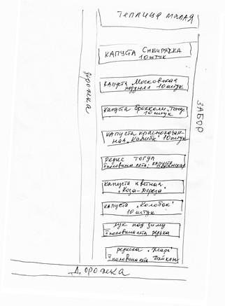 Вот такой план огорода я рисую каждый год.