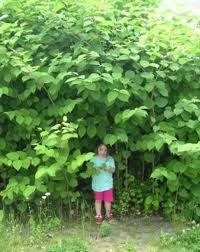 В таких джунглях ребенок может потеряться, а не только другие растения.