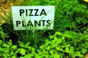 Травы для пиццы.