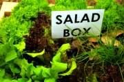 Листовые овощи для салата.