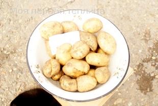 Еще один сорт, тоже одно гнездо. Взят только крупный картофель.