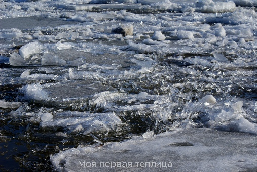Лед у берега. Красивые иглы на воде.