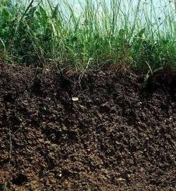 Хорошая почва.