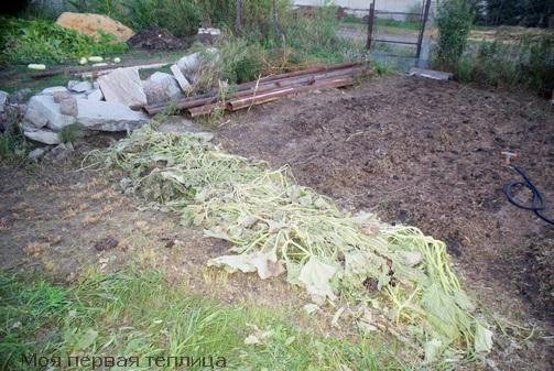 Осенью была приготовлена грядка для посева кабачков. На ней будут расти всего два растения.