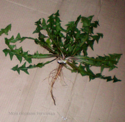 Это растение выбрало для себя местечко рядышком с первыми двумя.
